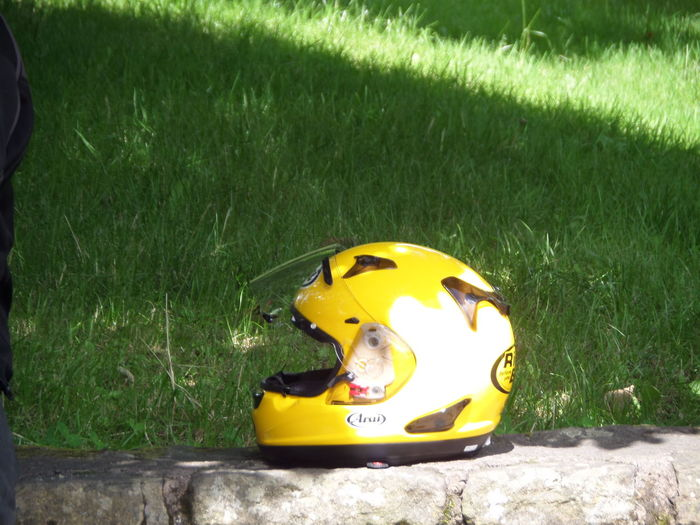 Composition Day Grass. Green Green Green Color Man Made Object Motorcycle Helmet On Wall. No People No People. Beauty In Nature Diamond Pattern ONe.Stgt Outdoors Representation Shadow. Stone Wall. Moss. Bali. Enjoying Life Vibrant Color Yellow Yellow Color Yellow.