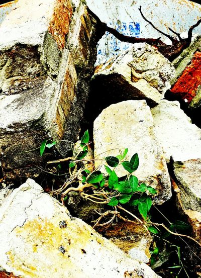 Vines Bricks