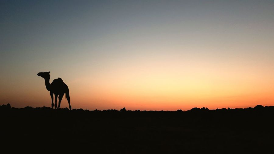 Silhouette horse on field against sky during sunset