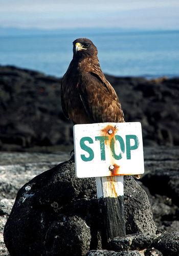 Warning sign on sea shore