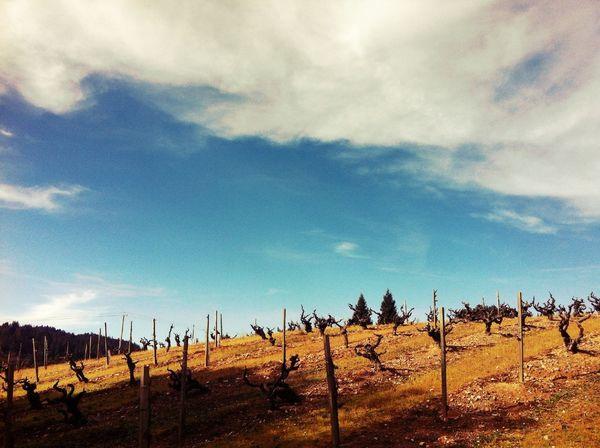 landscape at Dry Creek Valley Landscape