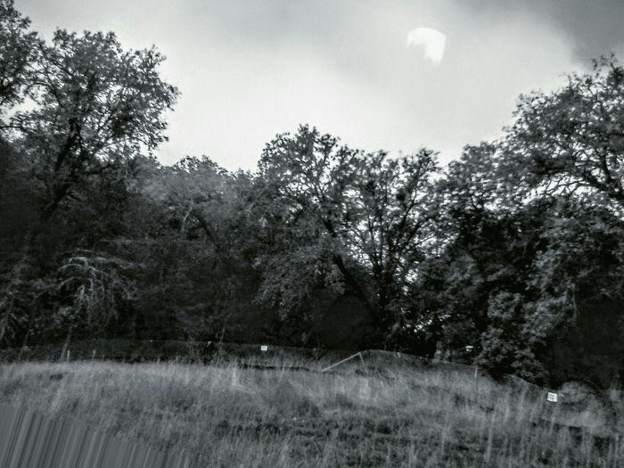 Into The Woods Black & White Northern California Mendocinocounty Eyeem Northen California Willits California Countryside EyeEm Nature Lover
