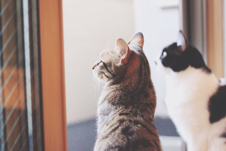 Cats looking through window