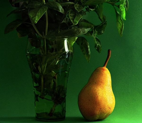 Yelllow Color Pear Basil Green Green Color Food Food And Drink Fresh Basil Freshness Fruit Healthy Eating Leaf Still Life Table Vase EyeEmNewHere