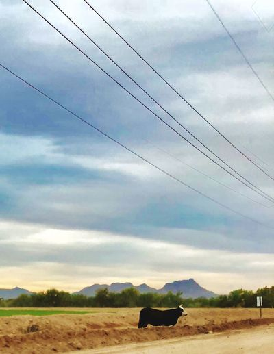 Arizona Farm