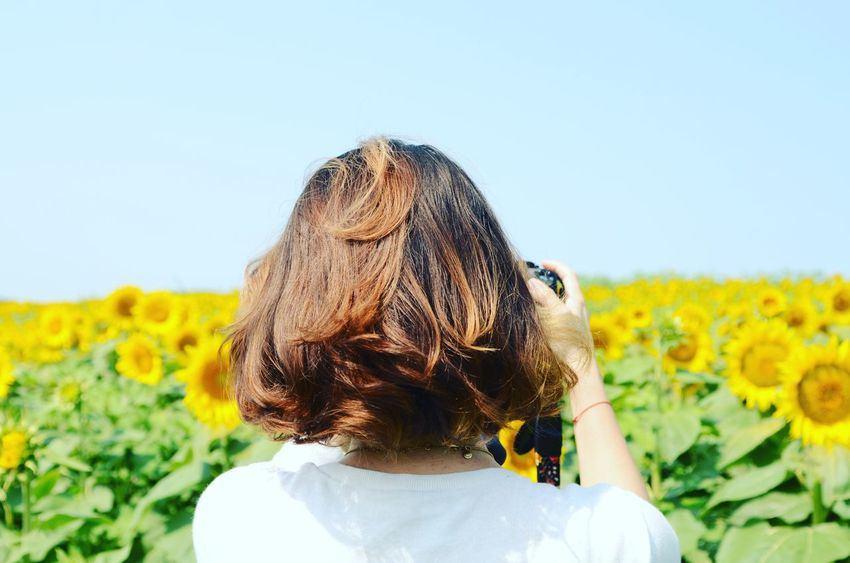 One Person Nature Field Summer One Girl Only Yellow Sky Petal Beauty In Nature Flowers America Farm Nature Grinter's Farm Flower Sunflower Kansas Rural Outdoors Sunflowers Field Paint The Town Yellow Fresh On Market 2017