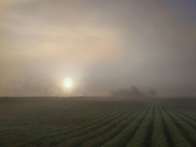 Planted agricultural field on a foggy morning. Field Agriculture Rural Scene Scenics Nature Beauty In Nature Farm Morning Light Sunrise Foggy Morning Betterlandscapes