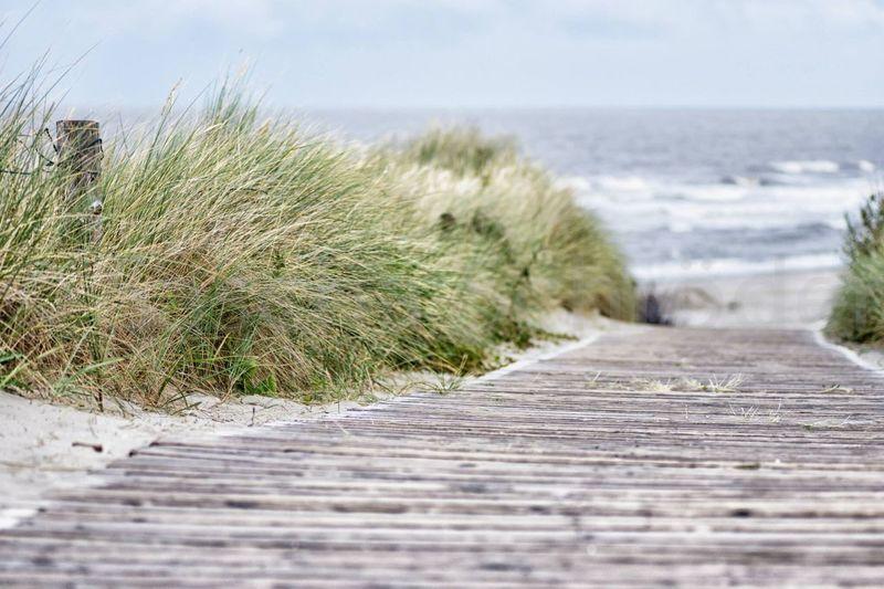Sea Horizon Over Water Nature Wood - Material Beauty In Nature Boardwalk Water