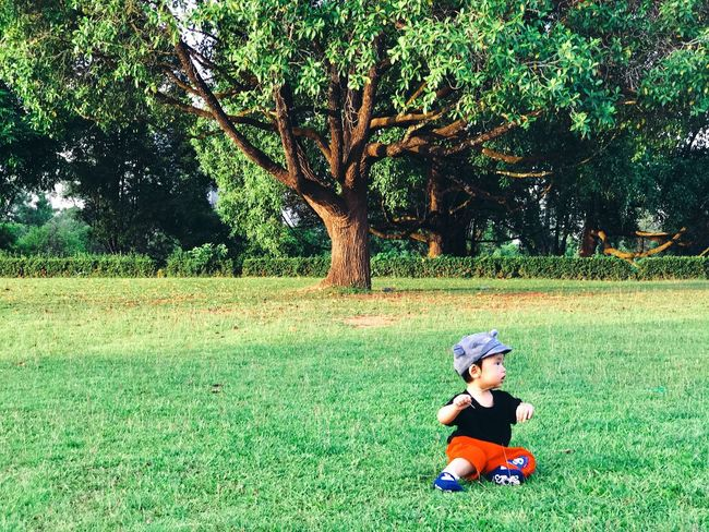 Little baby Children Happiness Tree Love Peaceful Still Life Future Kids Background Playing ASIA Plant Tree One Person Land Leisure Activity Real People Lifestyles Green Color Grass Outdoors Full Length Nature Growth Day Childhood Casual Clothing Sitting Child Innocence