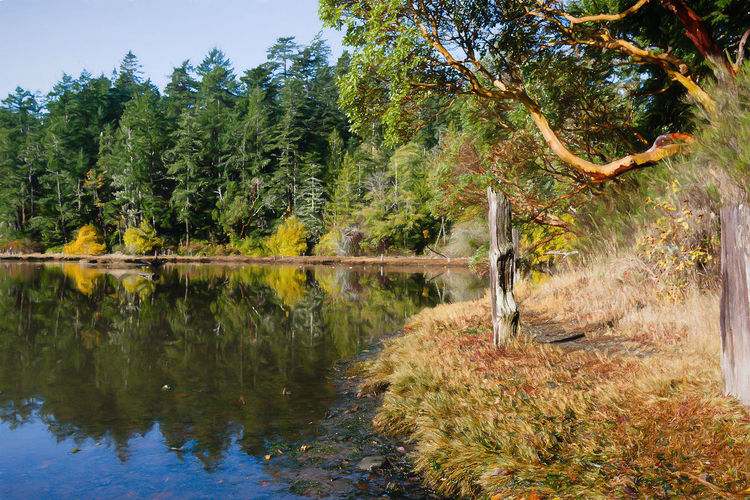 Arbutus Tree Madrona Tree Beauty In Nature Day Forest Green Color Growth Idyllic Lake Land Nature No People Non-urban Scene Outdoors Plant Reflection Reflections In The Water Scenics - Nature Tranquil Scene Tranquility Tree Water