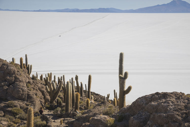 Cactus growing on rock formations in desert against sky