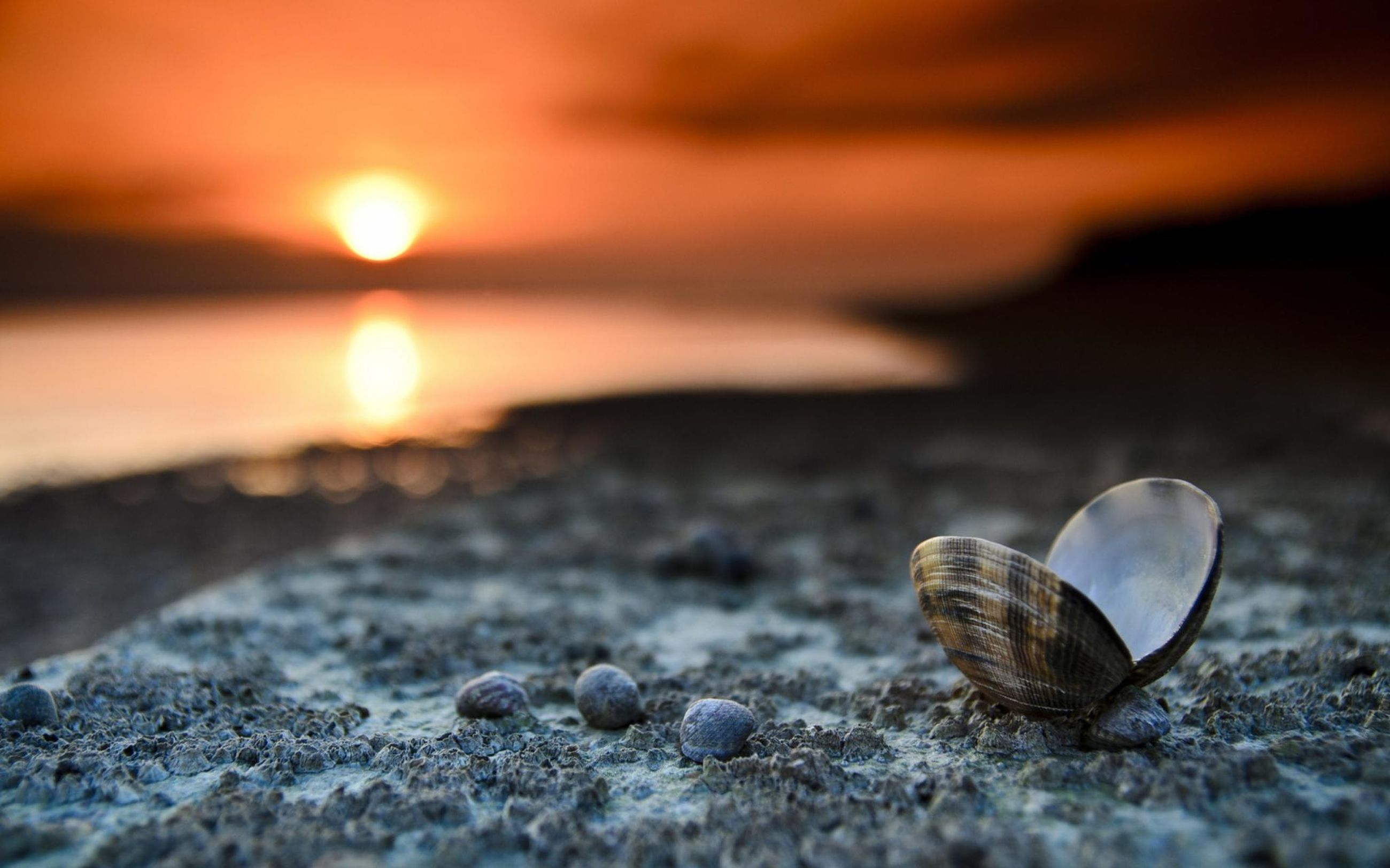 selective focus, close-up, focus on foreground, nature, animal themes, surface level, rock - object, beach, animals in the wild, sunset, outdoors, tranquility, one animal, wildlife, beauty in nature, stone - object, no people, sunlight, sand, pebble