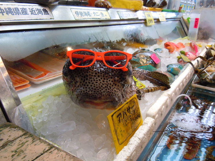 This is Karl, Karl is one of many fish that would sport these sun glasses every Tuesday in the Okinawan fish market that I would pass up during my study abroad term in Okinawa. Fish Japan My Student Life Okinawa Pufferfish Student Studyabroad Sushi First Eyeem Photo