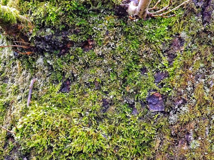 High angle view of moss growing on water