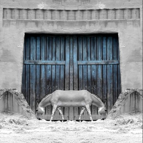 Closed horse in front of built structure
