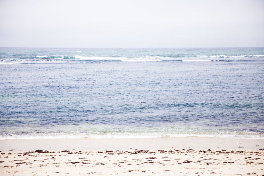 Animal Animal Wildlife Beach Beauty In Nature Day Horizon Horizon Over Water Land Motion Nature No People Outdoors Sand Scenics - Nature Sea Sky Tranquil Scene Tranquility Water Wave