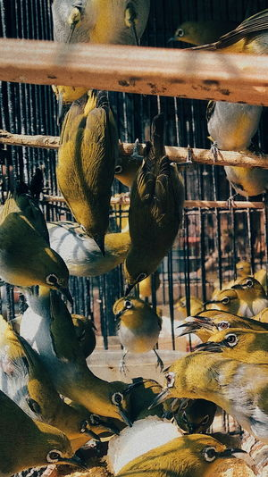 High angle view of bird in cage