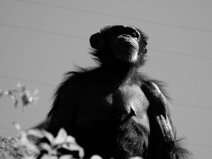 Low angle view of monkey standing against sky