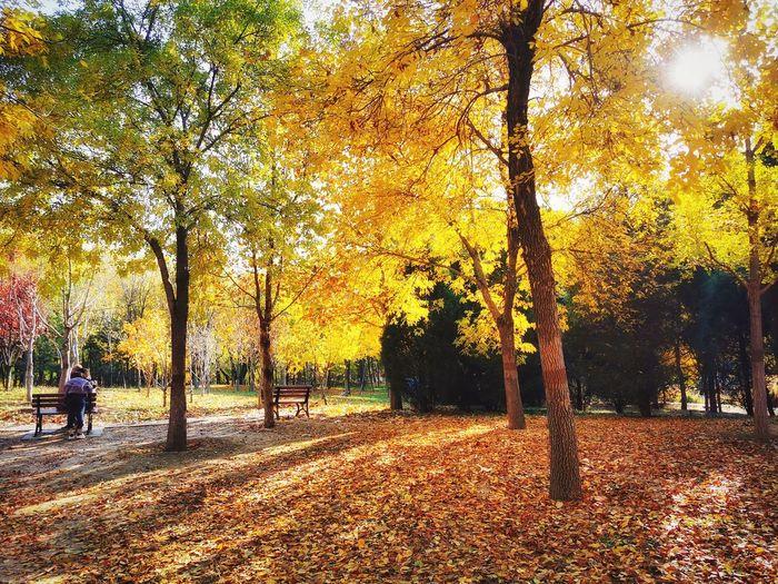 autumn Warm