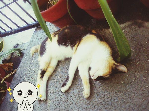 Meow ~