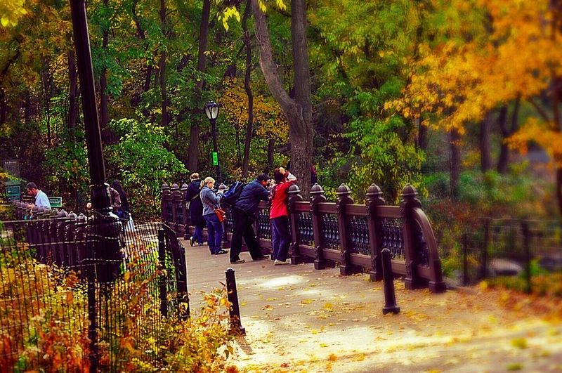 Tree Autumn Full Length People Nature Outdoors Real People Men Day Large Group Of People Central Park Manhattan Footbridge Streetphotography Walking Around Leaves🌿 Urban Oasis Adult Adults Only
