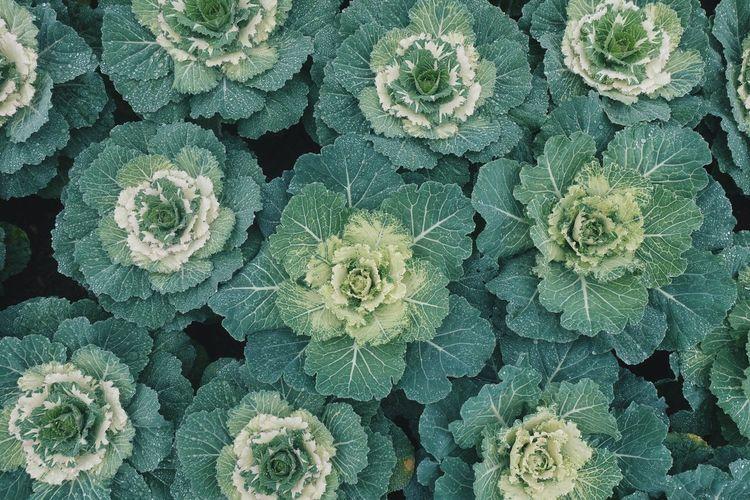 Full frame shot of vegetables growing at garden