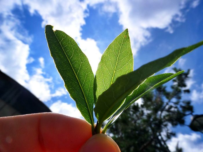 Yeşil Yeşillik Yeşil Doğa Yeşilliklerin Arasından Bi Yerde Yuşa Tepesi Türkiye