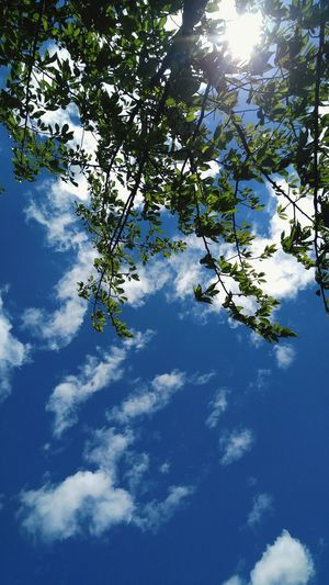 Tree Sky Low Angle View Blue Green Beauty In Nature