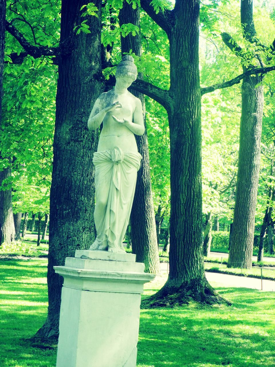 statue, tree, human representation, sculpture, tree trunk, male likeness, day, no people, growth, outdoors, nature, grass
