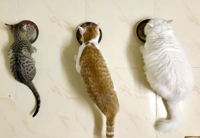 EyeEm Selects Indoors  No People Animal Themes Hanging Close-up Day Mammal Bird