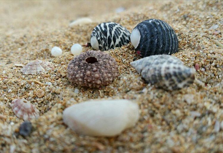 Puerto Rico Sand Nature Seashell Beach Outdoors Close-up No People Day Animal Themes EyeEm Gallery EyeEM Photos