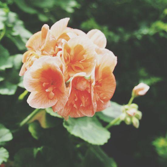 Flower Collection Flower Porn Flower