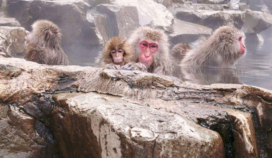 Monkey on rock in water