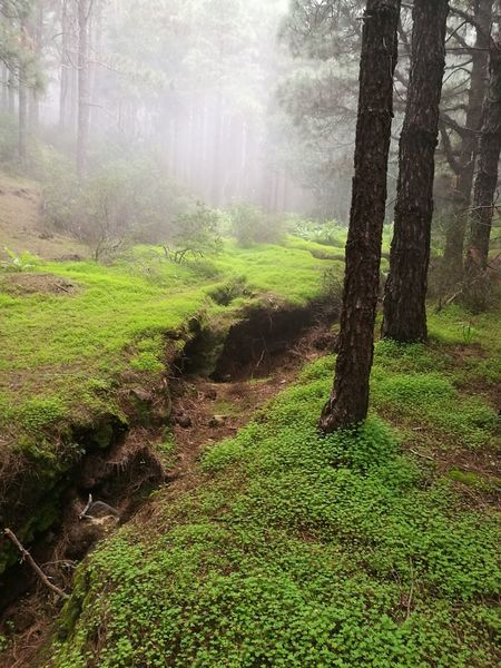 Las Raíces Tenerife Tree Nature Sunlight Beauty In Nature Tranquility No People