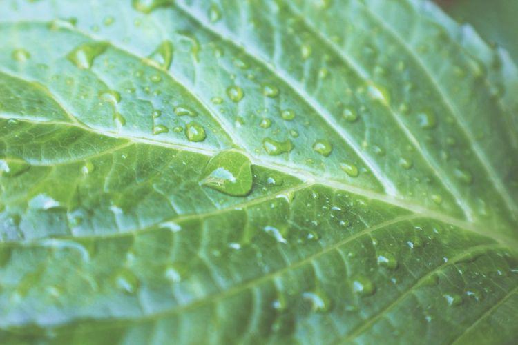 Rainy Days Nature Canonphotography Raindrops Macro