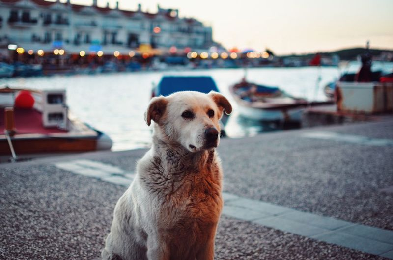 White Lightroom Warm Colors Sentinel Harbour Spring Sunset 35mm Nikon EyeEm Selects Dog One Animal Pets Animal Themes Domestic Animals Mammal Portrait Focus On Foreground Outdoors