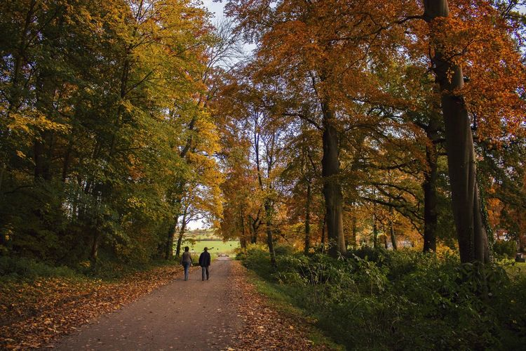 Autumn Autumn Colors EyeEm Nature Lover Nature Trees Walking Around Forest Voerstreek