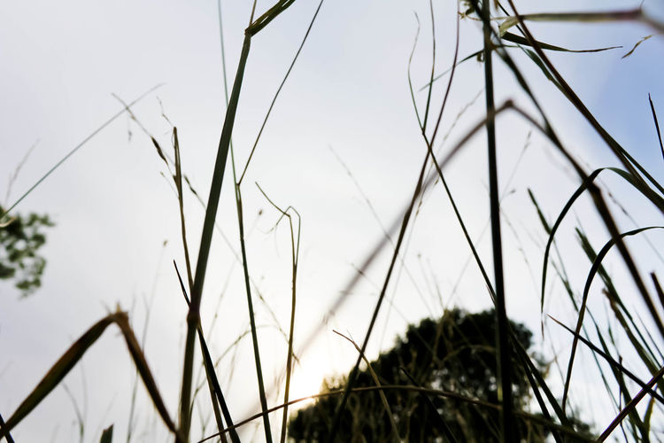 Beauty In Nature Cable Close-up Day Different Perspective Field Focus On Foreground Fragile Grass Growth Looking Up Low Angle View Nature Nature No People Outdoors Part Of Plant Scenics Simple Sky Fine Art Photography Tranquility Showcase June