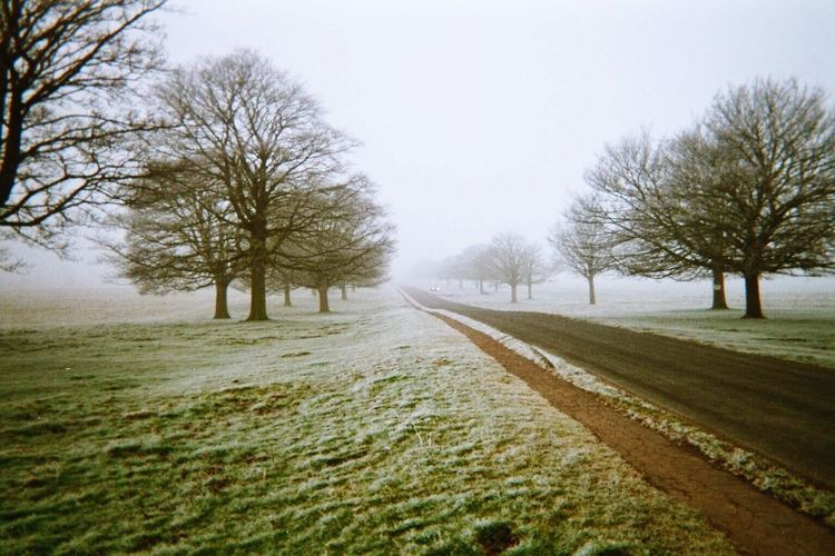 Tree Bare Tree Cold Temperature Winter Nature Tranquility Snow The Way Forward Clear Sky Tranquil Scene Landscape Outdoors Road Day Beauty In Nature No People Branch Sky EyeEm EyeEm Best Shots EyeEm Nature Lover Eye4photography  Foggy Foggy Morning Fog