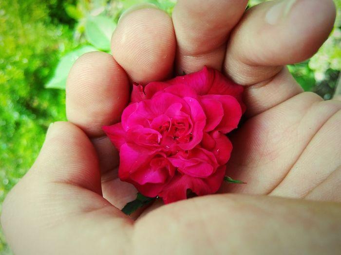 Rose 😍😍😍😍 First Eyeem Photo