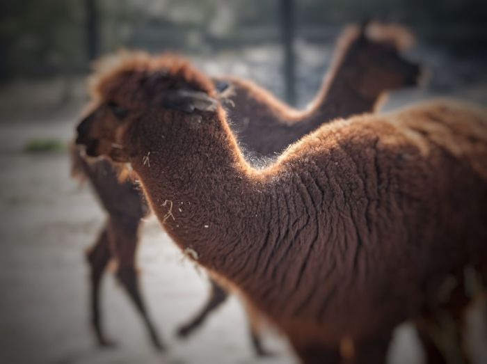 Alpaca Keep It Blurry Spring2015 Amstelpark Amsterdam