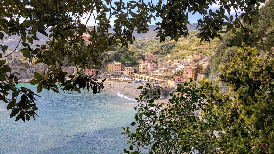 Tree Growth Nature Outdoors Beauty In Nature No People Branch Day Water Sky Freshness Sea City Landscape Arhitecture Cinque Terre Beach Nature Sand Vacations Cinqueterre Travel Tourism Travel Destinations Built Structure