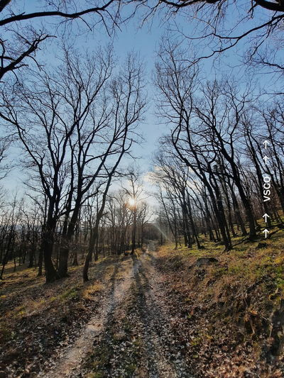 Bare trees by road in forest