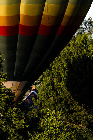 Hot air ballon lifts off between trees. Lift Off Adventure Air Vehicle Balloon Ballooning Festival Day Flying Green Color Growth Hot Air Balloon Low Angle View Mid-air Mode Of Transportation Multi Colored Nature No People Outdoors Plant Transportation Travel Tree