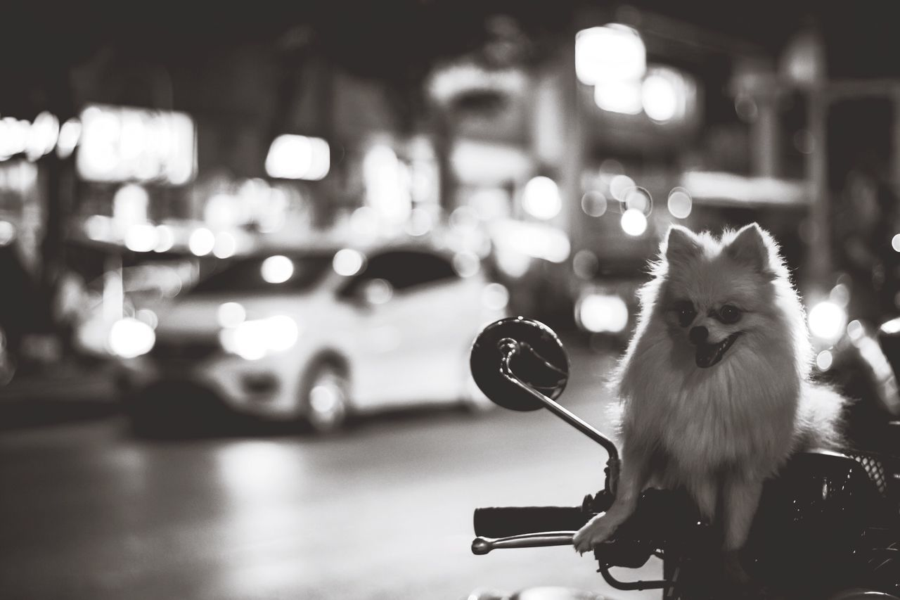 Portrait Of Dog Relaxing On Motor Scooter At Street