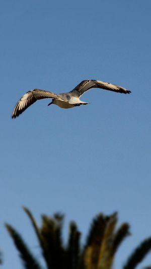 Sky Relaxing Enjoying Life Hello World Nature Wintertime Seagull