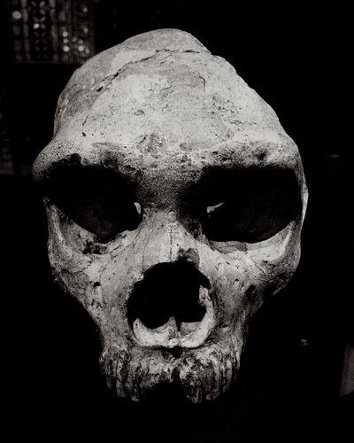 Skull Skulls Black & White Archaeology
