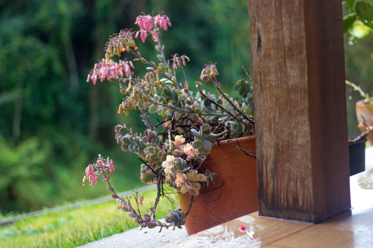 Beauty In Nature Blooming Blossom Branch Day Flower Flower Head Focus On Foreground Fragility Freshness Growth In Bloom Nature Petal Pink Color Plant Tree Tree Trunk