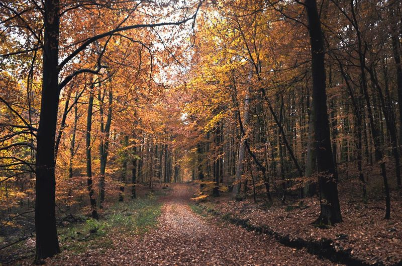 Herbst im Wald 🍂🍂🍂 Tree Plant Autumn Change Forest Beauty In Nature Tranquility Scenics - Nature WoodLand Idyllic
