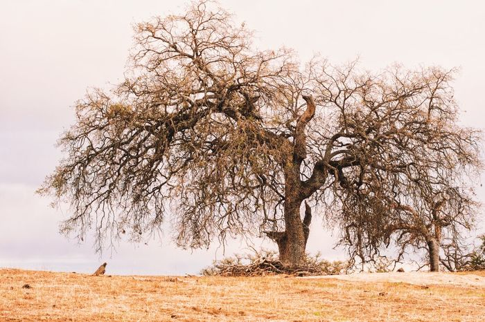 Tree No People Nature Outdoors Landscape Beauty In Nature Sky Day Oak Oaktree Nature Tranquil Scene Forest